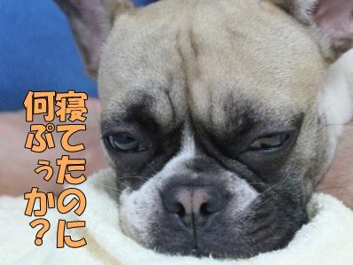 2-1_20120710133459.jpg