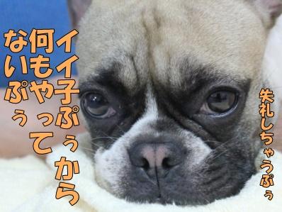 3-1_20120710133458.jpg