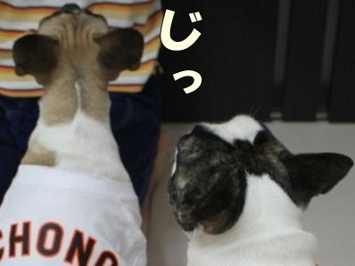 3-1_20120919115243.jpg