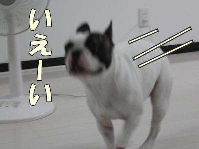 3-1_20121102171046.jpg