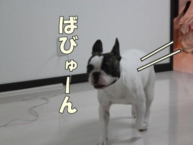 4-1_20121102171046.jpg