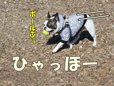 4-1_20121108110102.jpg