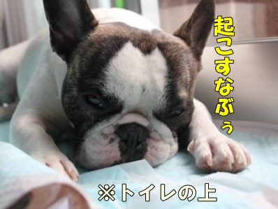 5-1_20120507140437.jpg