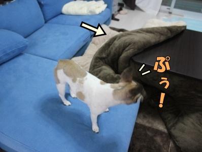 5-1_20121114110845.jpg