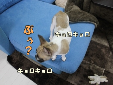 6-1_20121114110845.jpg