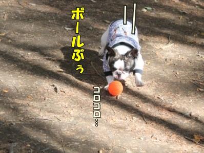 7-1_20121108110125.jpg
