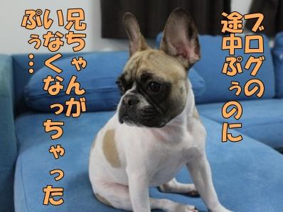 7-1_20121114110913.jpg