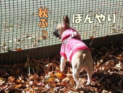 9-1_20121108110124.jpg
