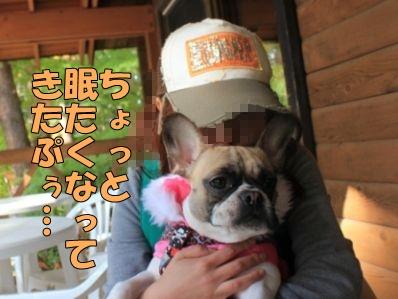 9-1_20121113113940.jpg