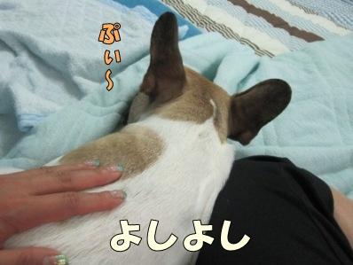 9_20120614163833.jpg