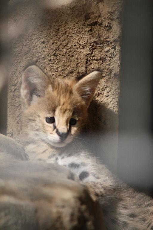 '12.8.3 serval 0417
