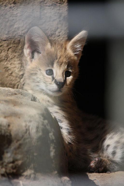 '12.8.3 serval 0420
