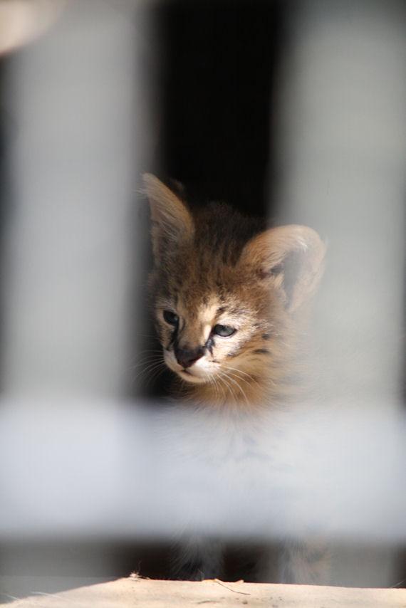 '12.8.3 serval 0453