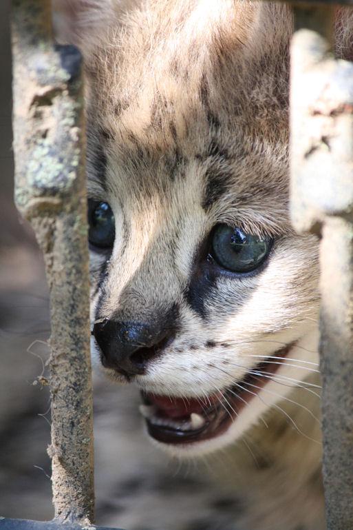 '12.8.3 serval 0507