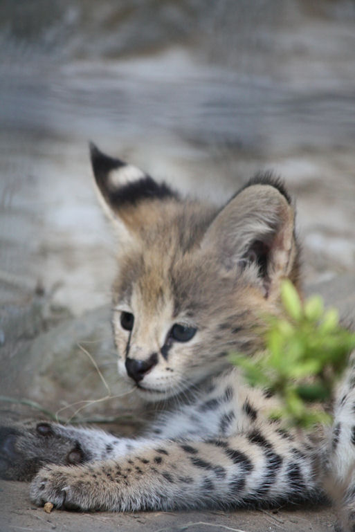 '12.8.3 serval 0726