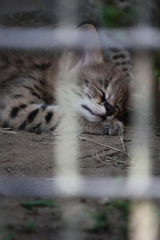 '12.8.3 serval 0657