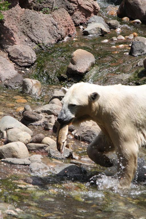 '12.8.5 polar bear 0211