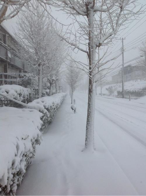 雪が降った6