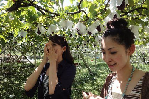 神奈川に近い山梨の桃狩り食べ放題時間無制限