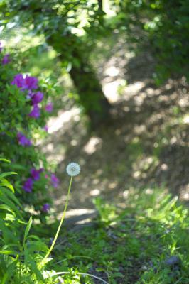 120506UshitaRosePark.jpg