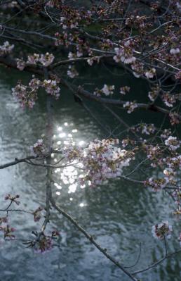 20120404_Kurashiki_Summarit50_Gold100.jpg