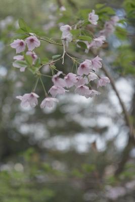 20120415_Ebayama_Summicron50F2L_3.jpg
