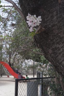 20120415_Ebayama_Summicron50F2L_4.jpg