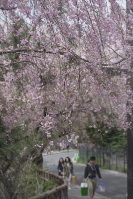 20120415_Ebayama_Summicron50F2L_5.jpg