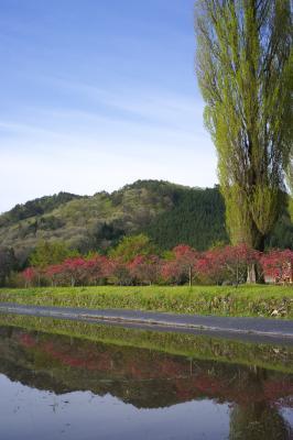 20120430_Nagazo_ColorSkopar28F35L.jpg