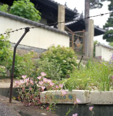 20120604_Onomichi_Rolleiflex28F_Portra160VC_12.jpg