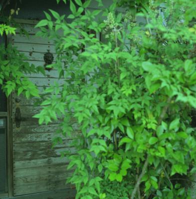 20120604_Onomichi_Rolleiflex28F_Portra160VC_17.jpg