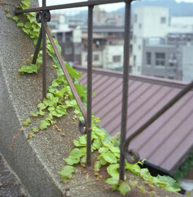 20120604_Onomichi_Rolleiflex28F_Portra160VC_1.jpg