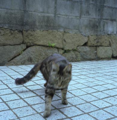 20120604_Onomichi_Rolleiflex28F_Portra160VC_21.jpg