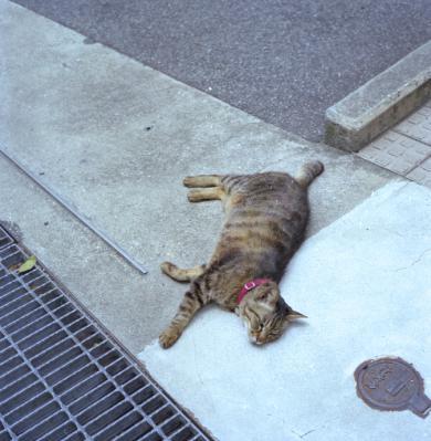 20120604_Onomichi_Rolleiflex28F_Portra160VC_7.jpg
