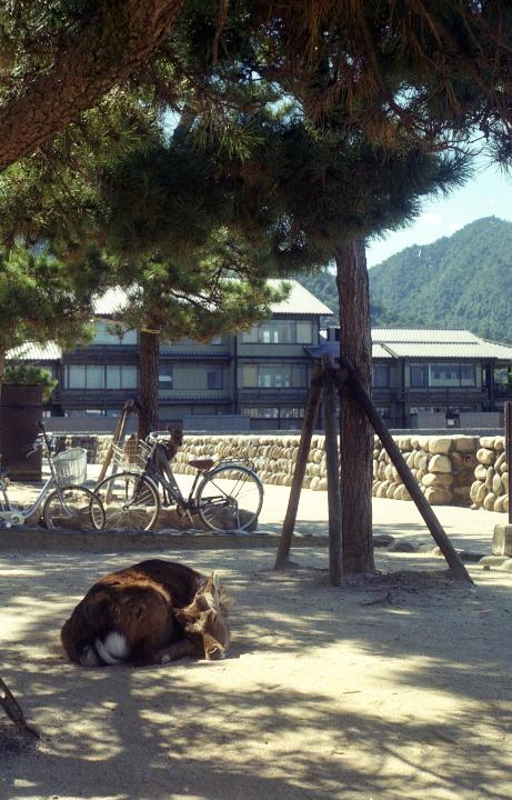 20121009_Miyajima_Elmar50__4.jpg
