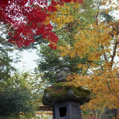 20121119_宮島_Autocord_Portra160VC_6