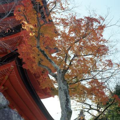 20121119_宮島_Autocord_Portra160VC_10