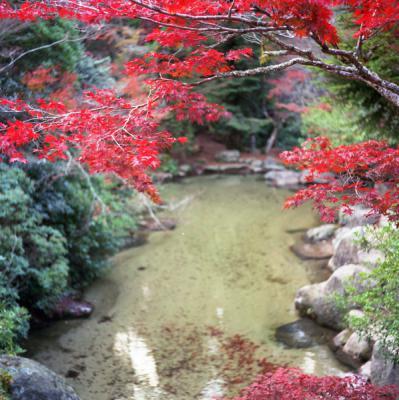20121119_宮島_Autocord_Portra160VC_8