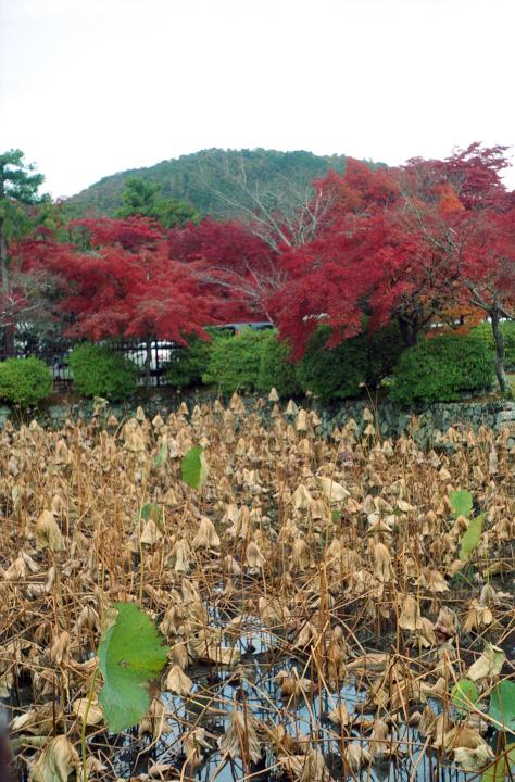 20121124_天龍寺_Elmar_Gold