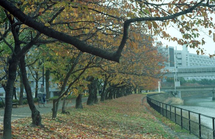 20121125_基町散歩_Elmar50_Gold