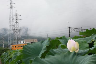 2012_08_14_Iwakuni_Lotus00012.jpg