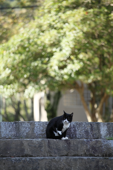 2012_09_30_Cat00001.jpg