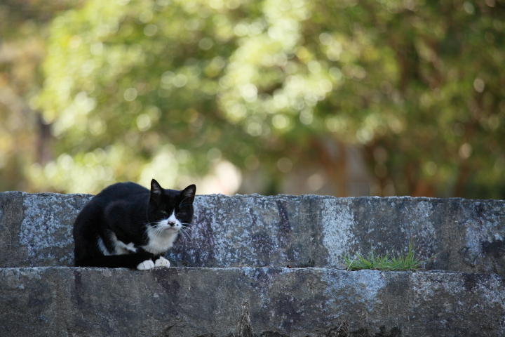 2012_09_30_Cat00002.jpg