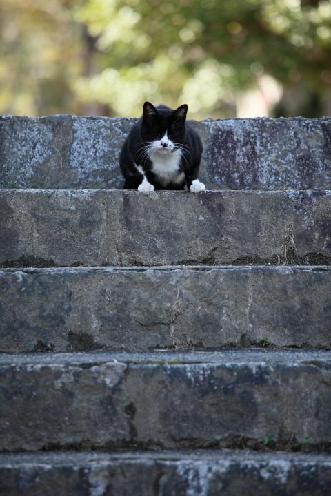 2012_09_30_Cat00003.jpg