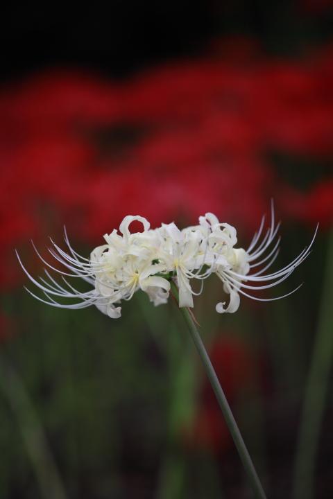 2012_09_30_botanicalpark00001.jpg