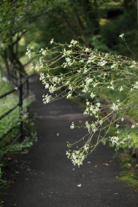 2012_09_30_botanicalpark00007.jpg