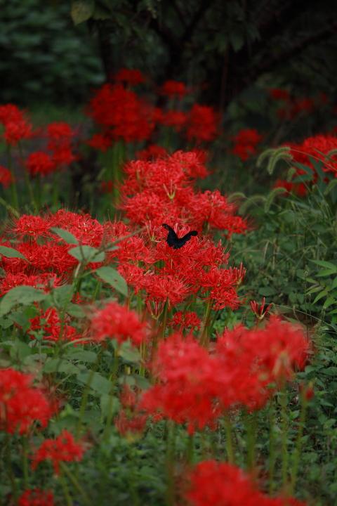 2012_09_30_botanicalpark00016.jpg