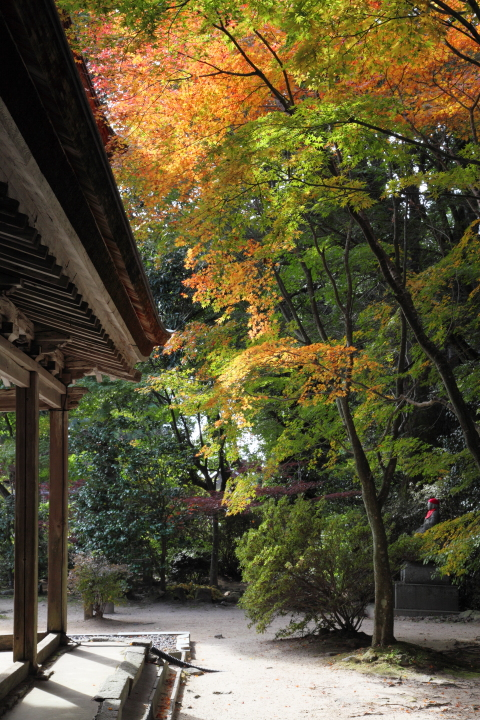 2012_11_04_GokurakuTemple_5Dm20004.jpg