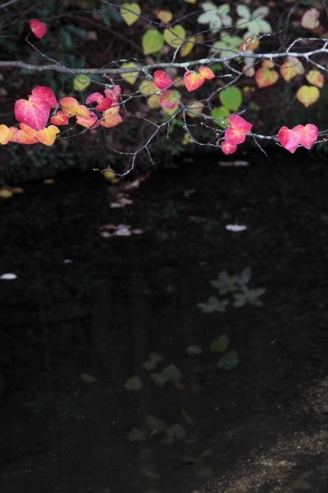 2012_11_04_Ohno_5Dm20018.jpg