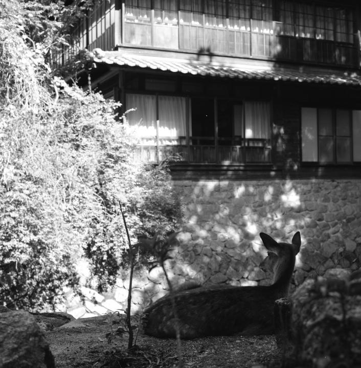 Miyajima_20121009_Rolleiflex28F_Acros__19.jpg